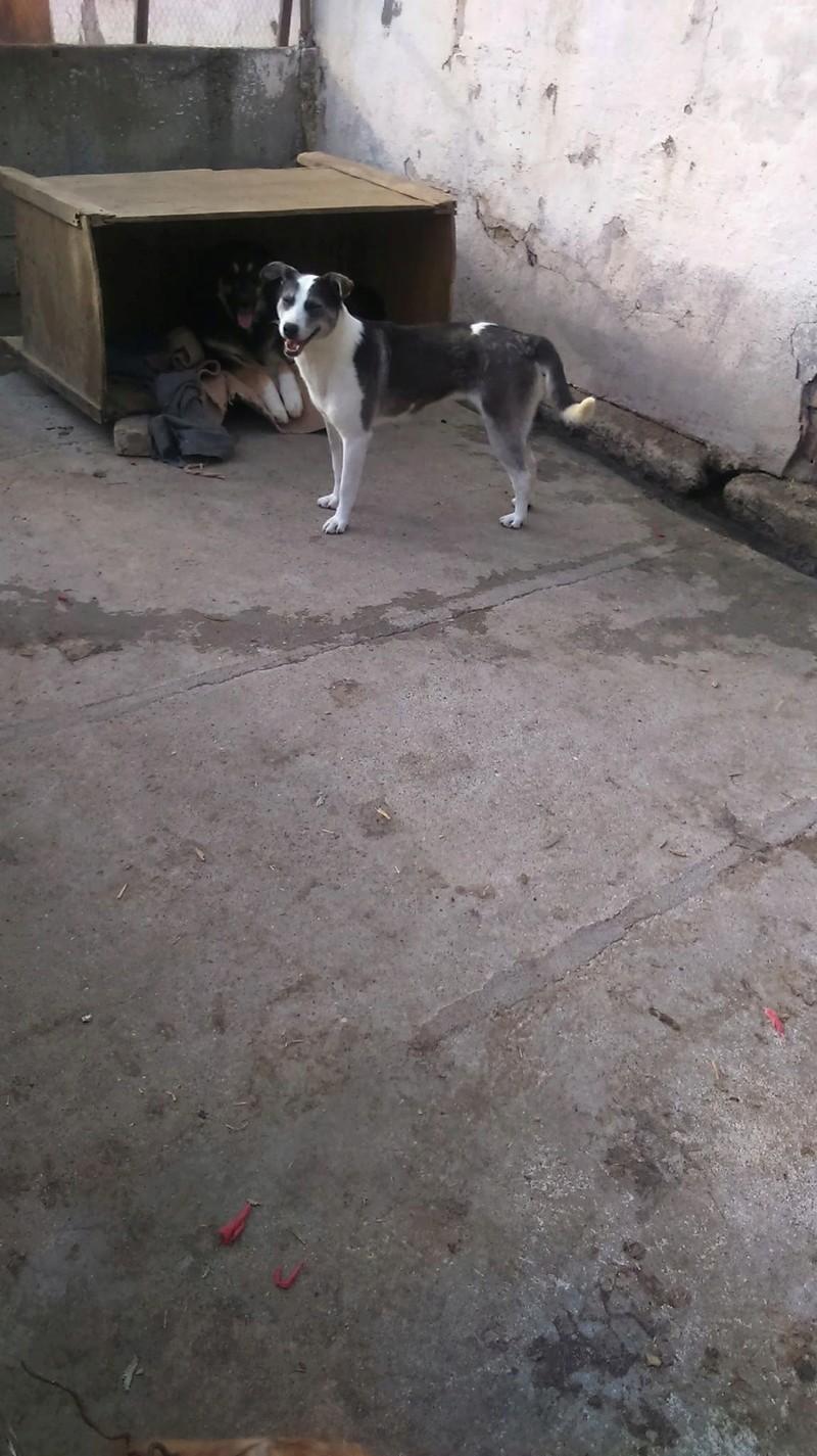 SOURY F-X, Née 2014 taille moyen 12 KG (ORASTIE/RUE)- Une très jolie chienne timide - - Page 2 Rece1638