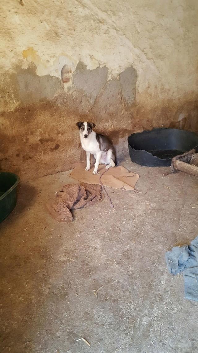 SOURY F-X, Née 2014 taille moyen 12 KG (ORASTIE/RUE)- Une très jolie chienne timide - - Page 2 Rece2063