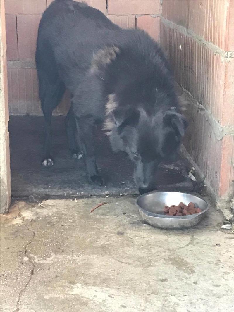 EBONY M-X 4 ans taille moyenne 15KG-FOURRIERE ORASTIE- Un chien noir timide-En pension à Timisoara - Page 5 Receiv17