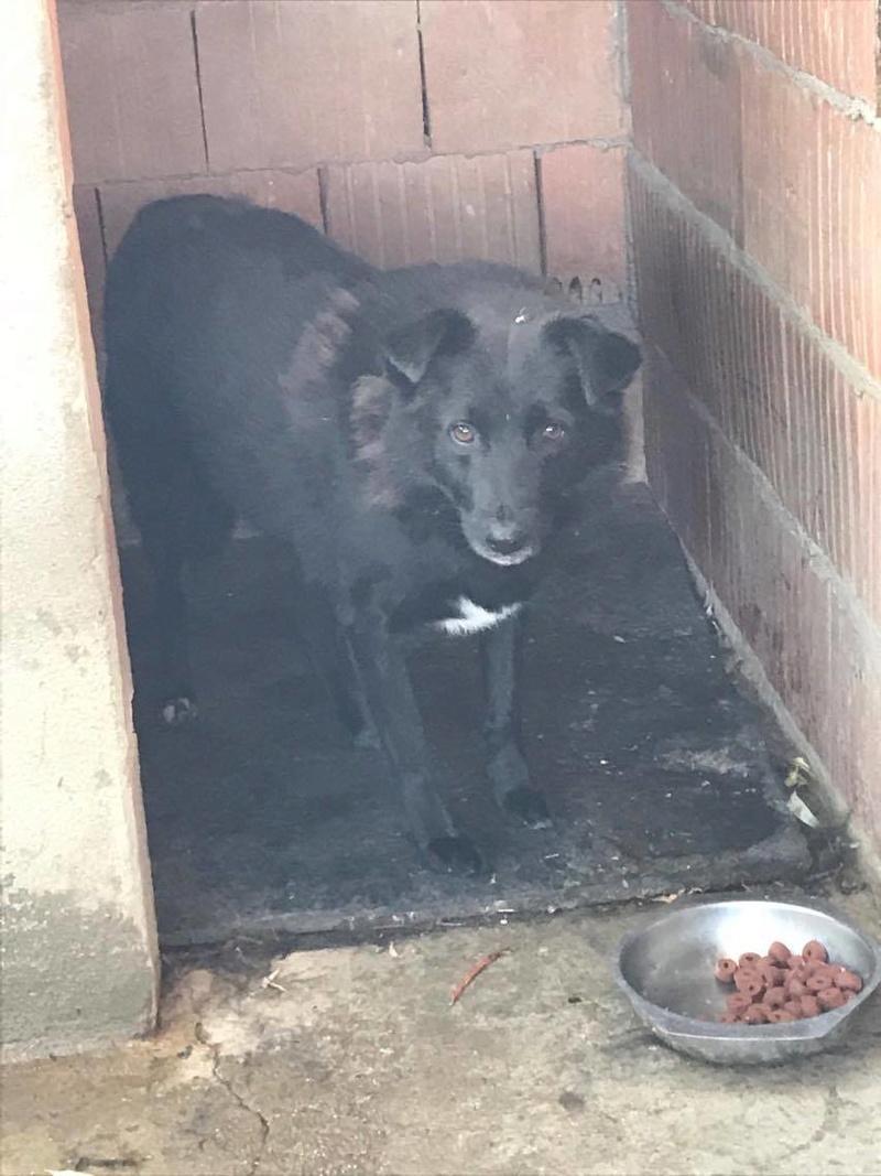 EBONY M-X 4 ans taille moyenne 15KG-FOURRIERE ORASTIE- Un chien noir timide-En pension à Timisoara - Page 5 Receiv18