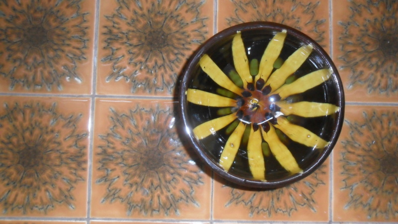 Lovely little slip ware bowl sunflower design Sam_8110