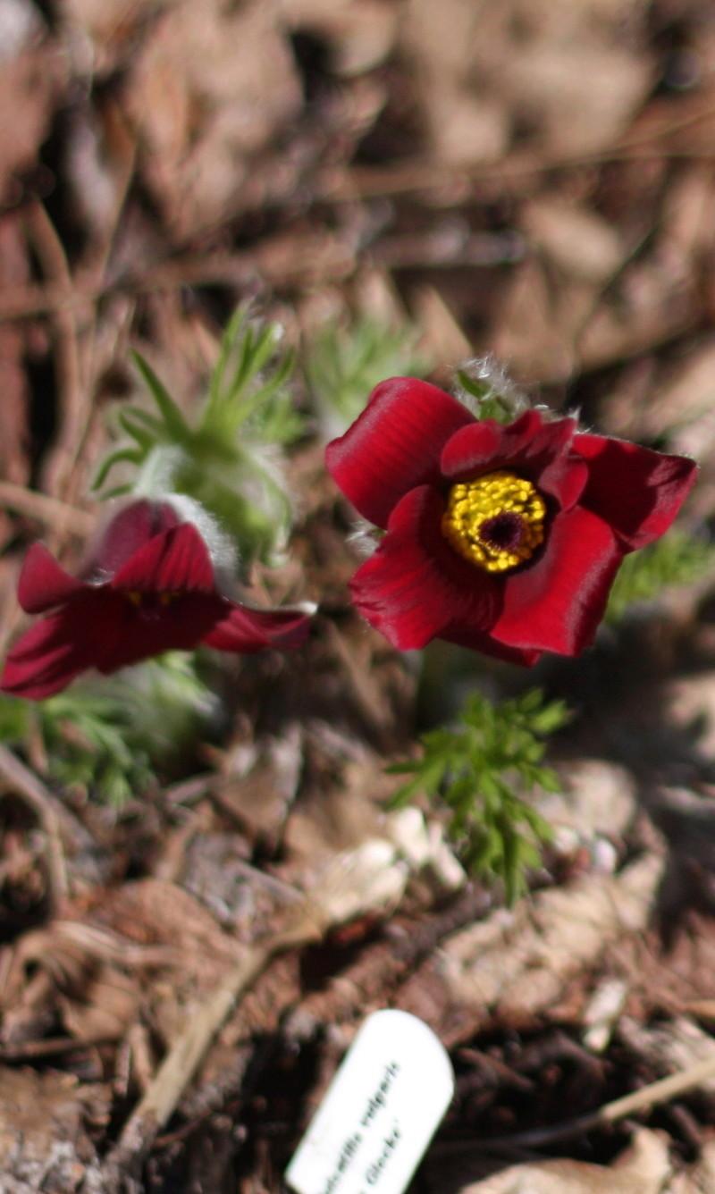 Les fleurs chez Pinco - Page 6 Img_4710