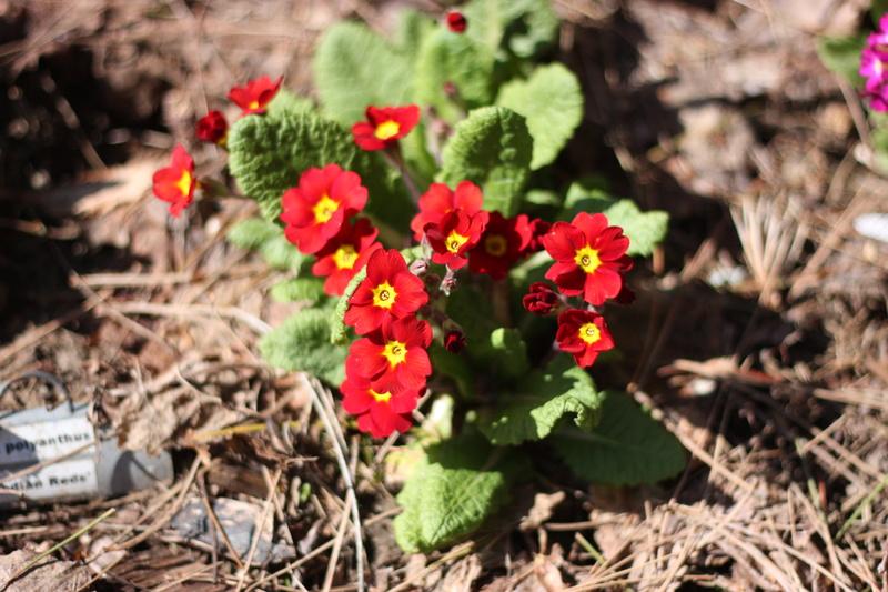 Les fleurs chez Pinco - Page 6 Img_4810