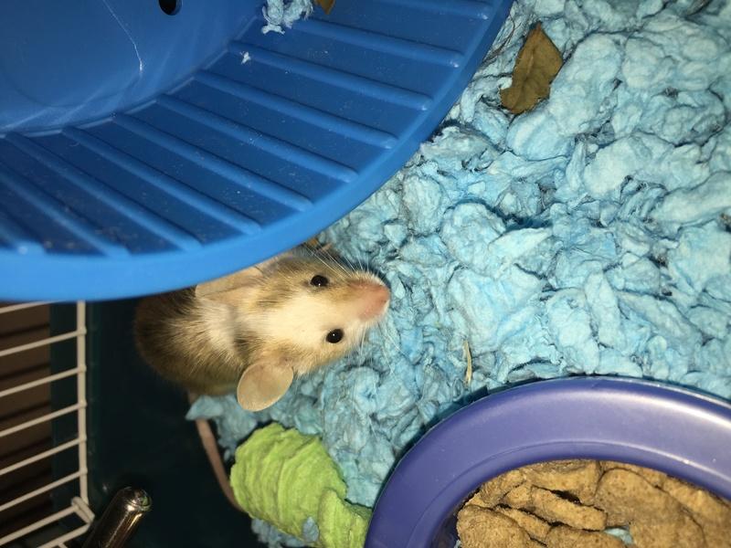 Meet Oscar!! 2104d910