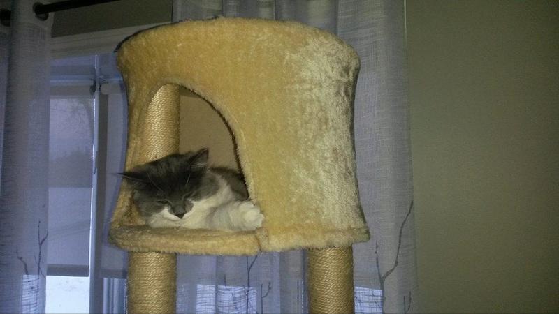 Adopter un deuxième chat 15368710