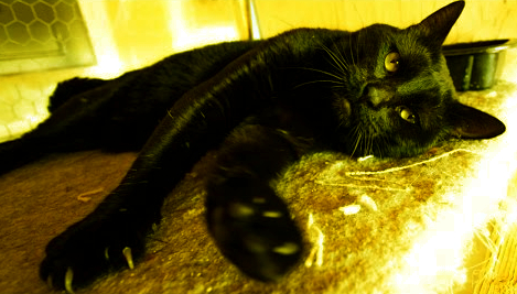 Кошки и мистика. 1213