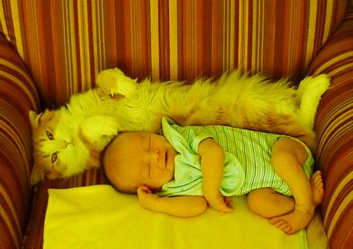 Кошки и мистика. 1313