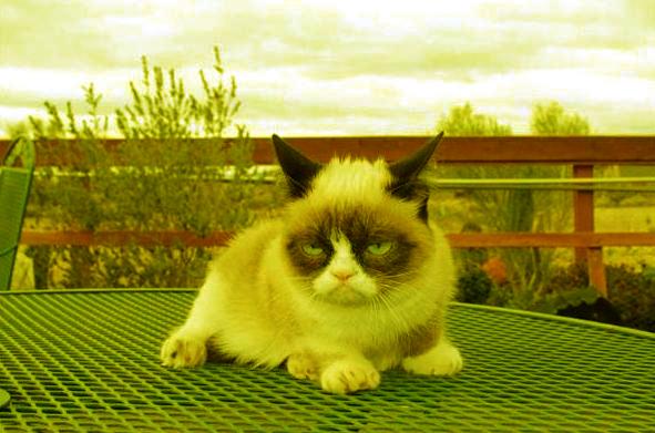 Кошки и мистика. 1413