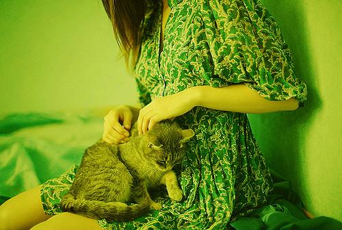 Кошки и мистика. 1512