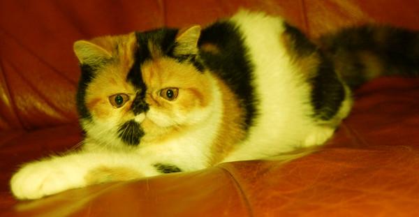 Кошки и мистика. 2111