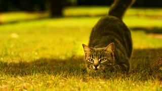 Кошки и мистика. 817
