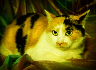 Кошки и мистика. 915