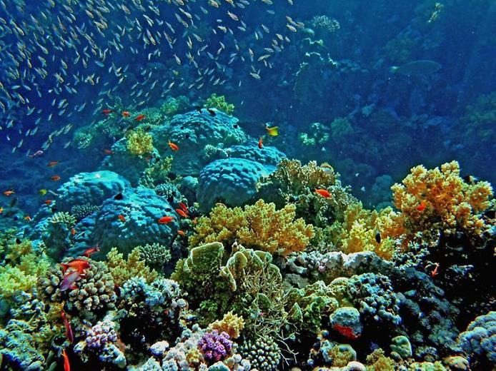 Podvodni svet (osim riba) - Page 5 1-310