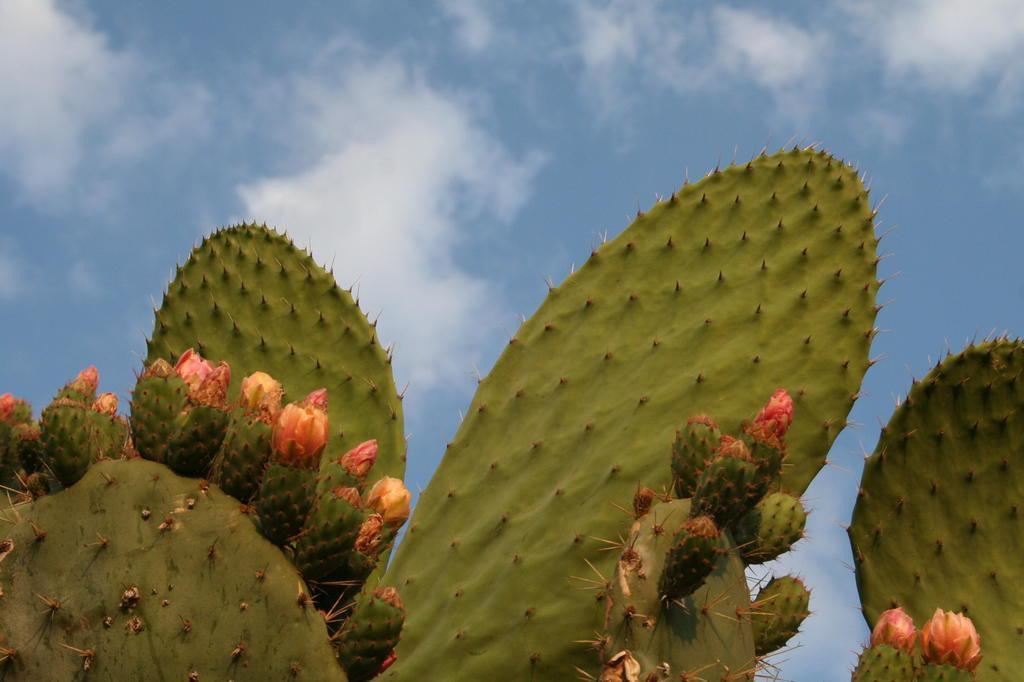 Kaktusi - Page 35 23944010