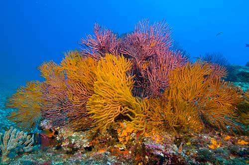 Podvodni svet (osim riba) - Page 6 4263_110