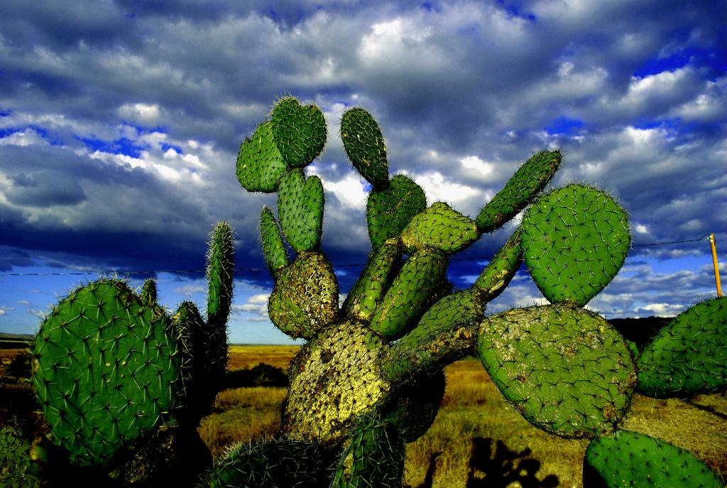 Kaktusi - Page 35 55272810