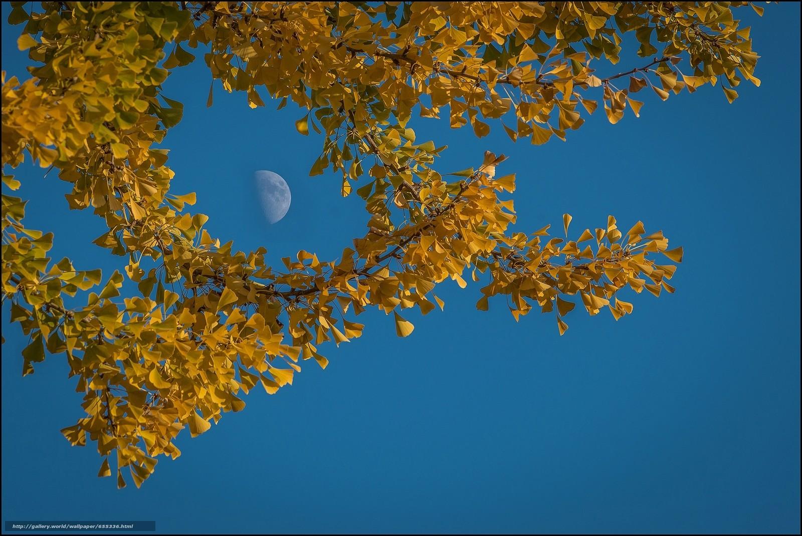 Jesen - Page 31 65533610