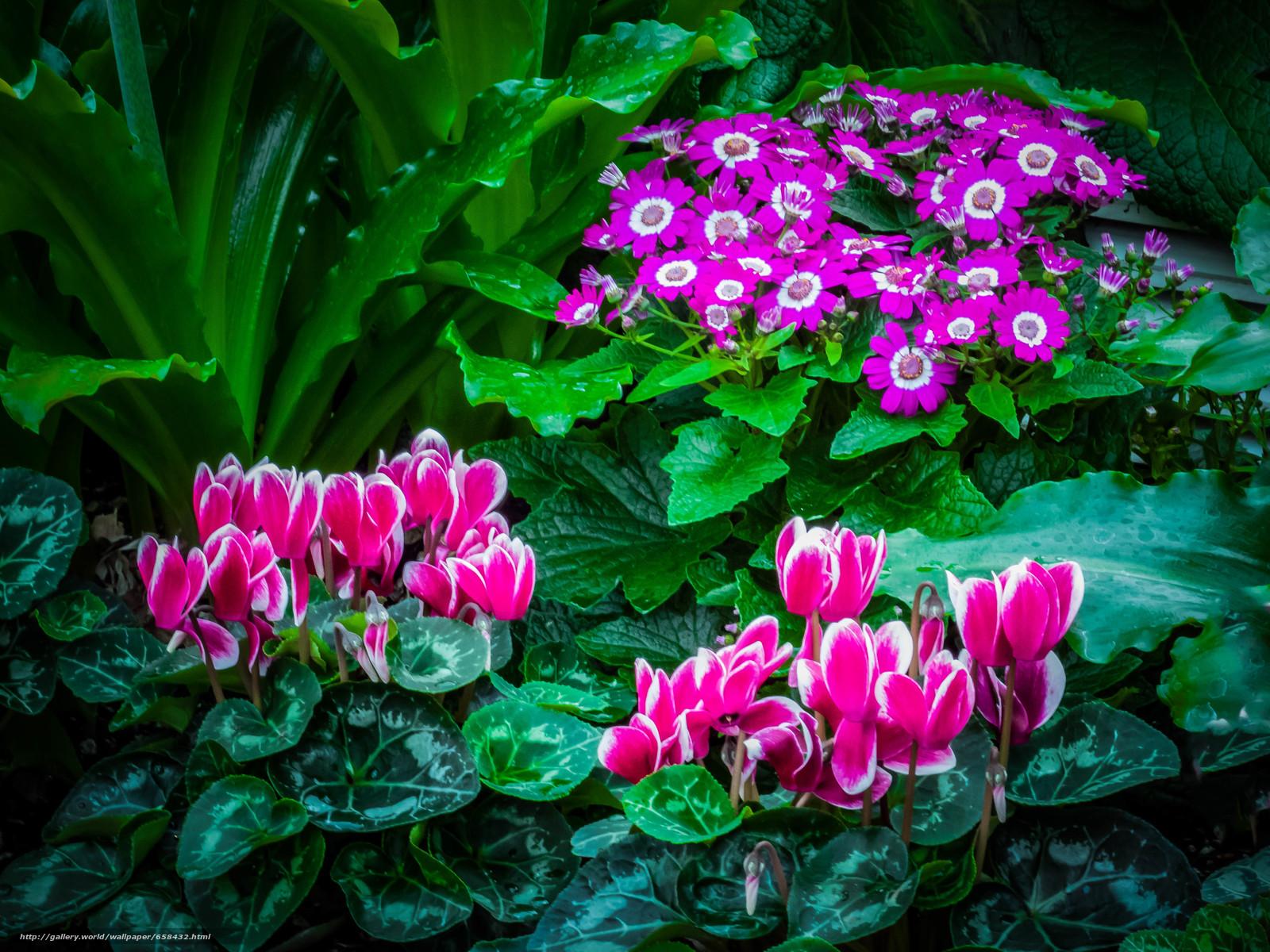 Cveće - Page 23 65843210