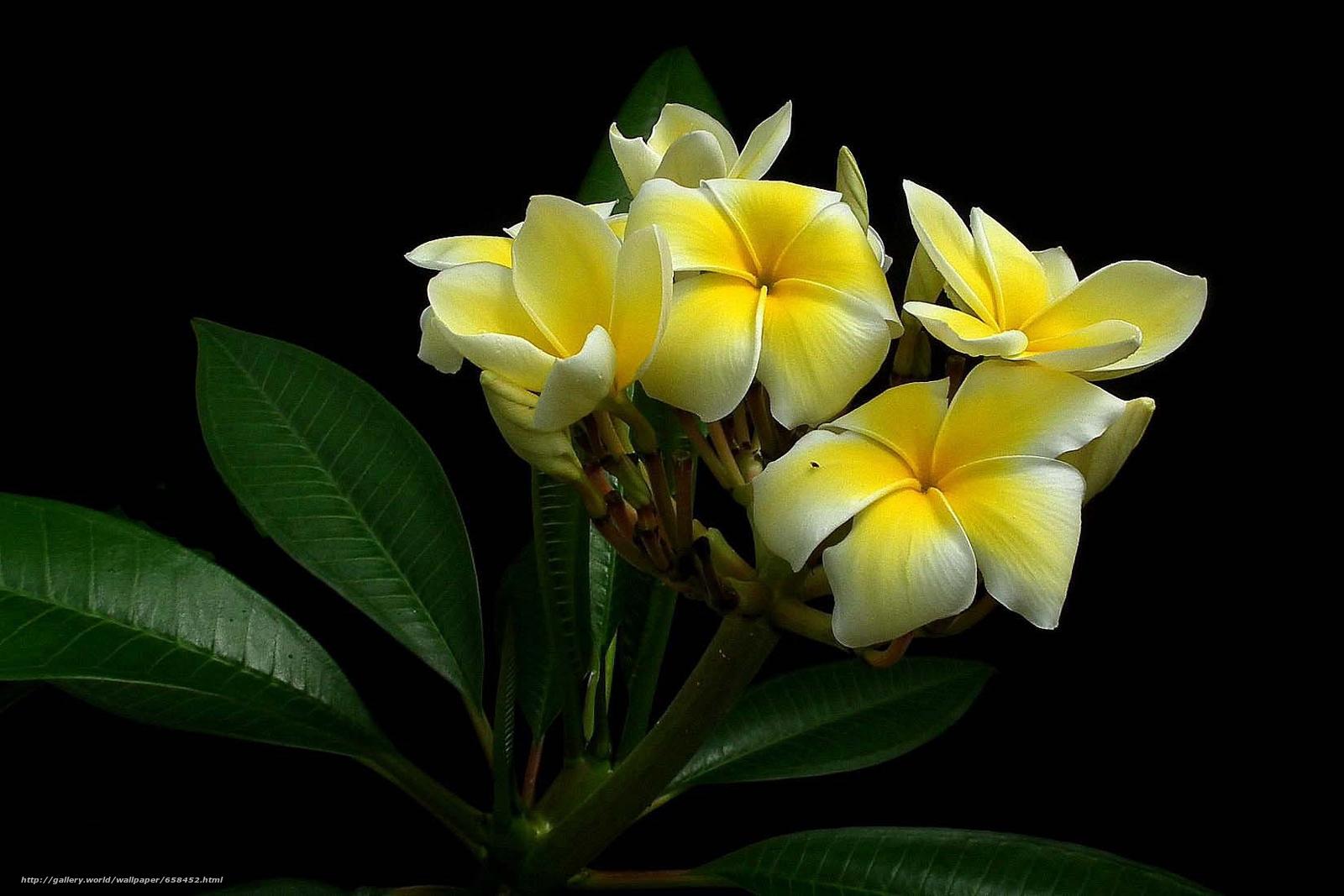 Cveće - Page 23 65845210