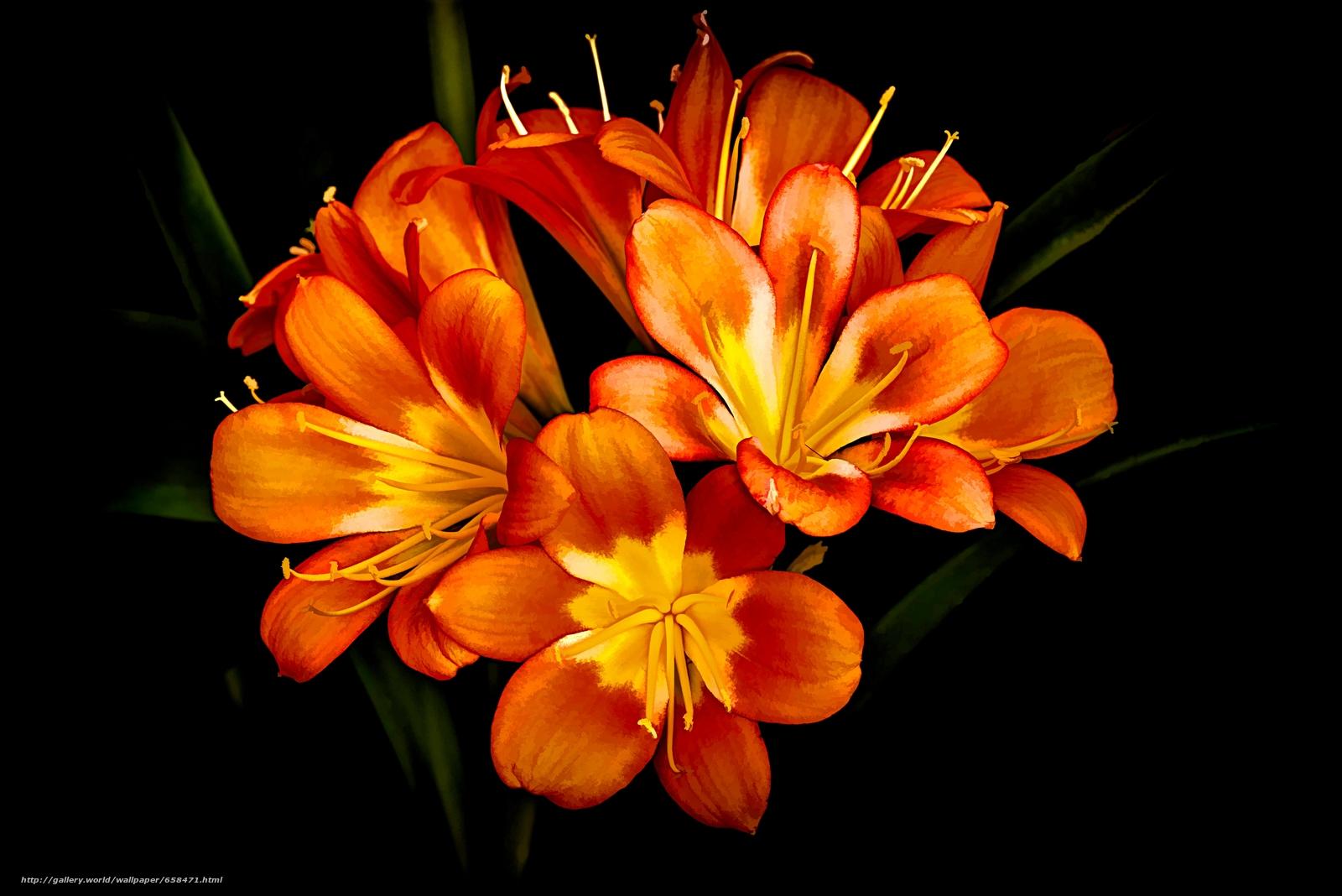 Cveće - Page 22 65847110