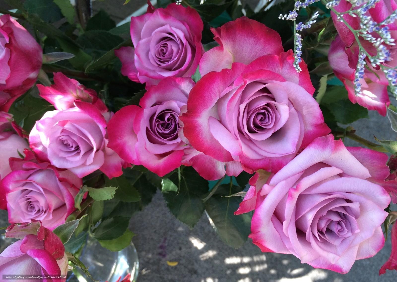 Cveće - Page 22 65848910