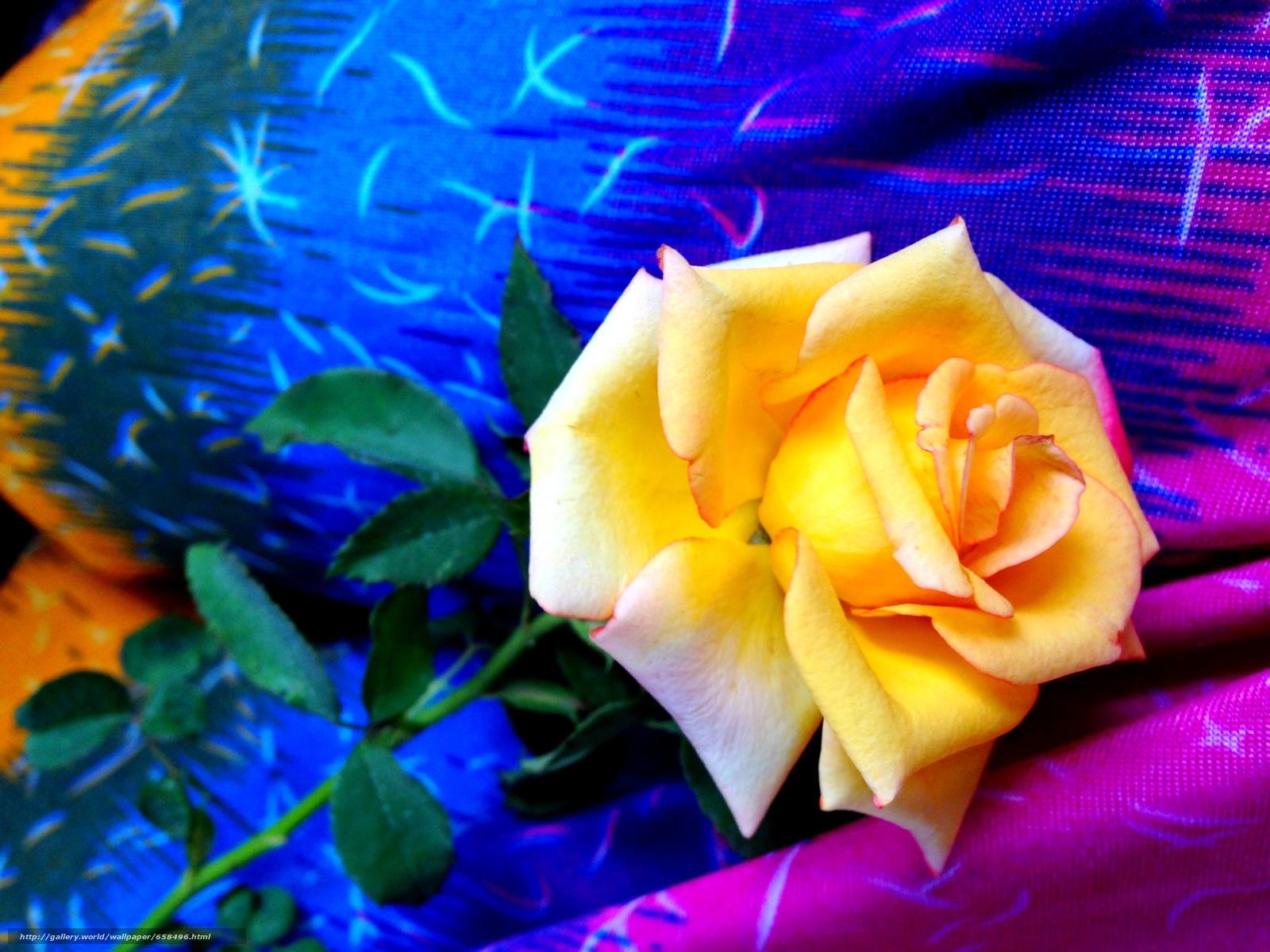 Cveće - Page 22 65849610