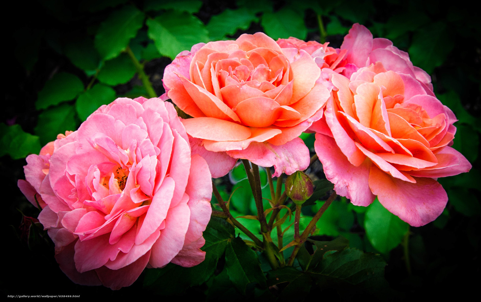 Cveće - Page 22 65849910