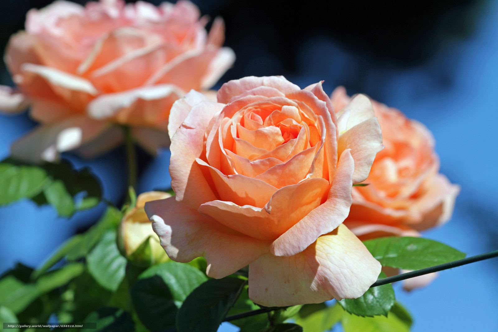 Cveće - Page 22 65851610