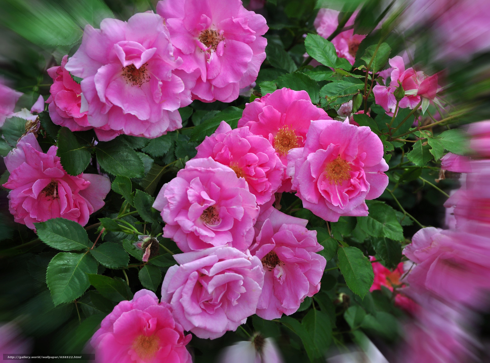 Cveće - Page 22 65852210