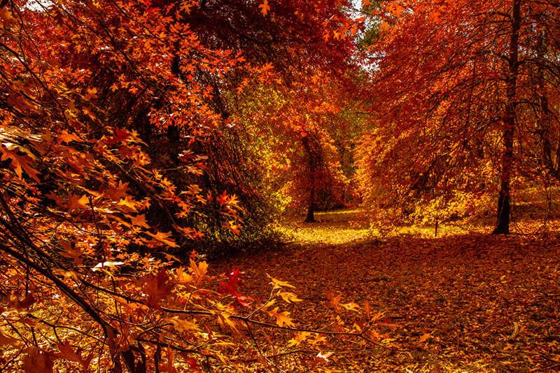 Jesen - Page 31 Autumn19