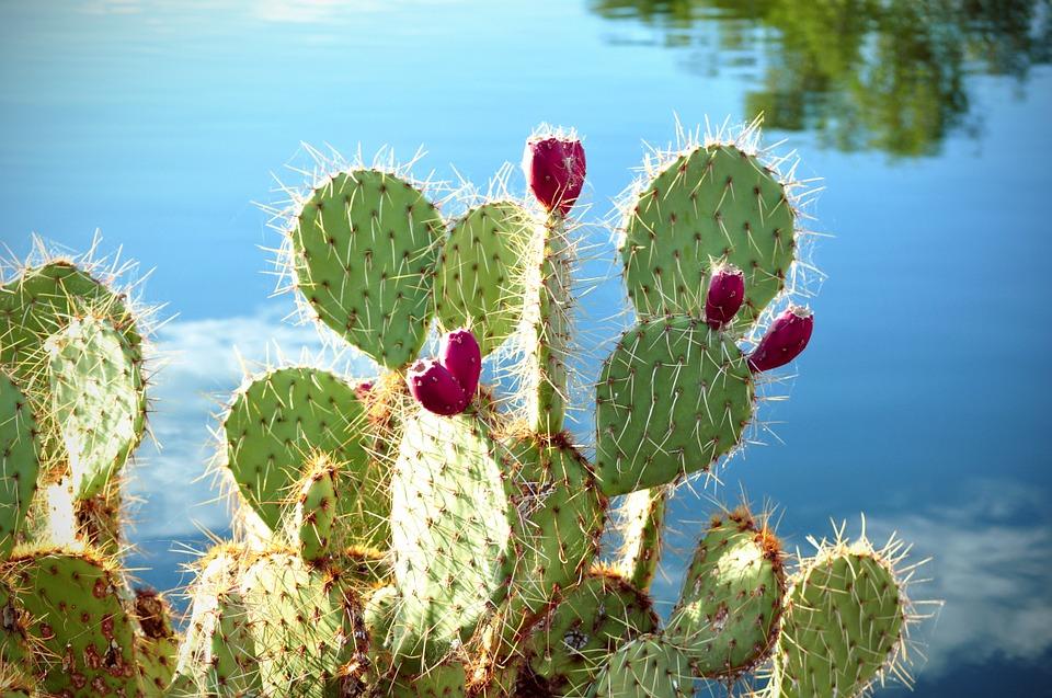 Kaktusi - Page 35 Cactus15