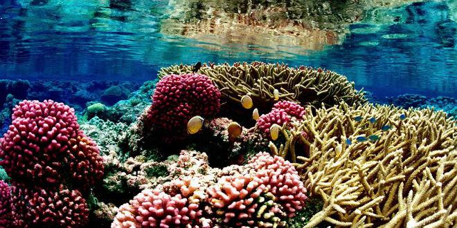 Podvodni svet (osim riba) - Page 6 Coral-11
