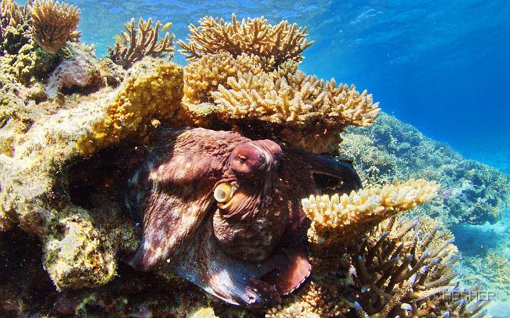 Podvodni svet (osim riba) - Page 6 Dc6fbd10