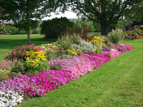 Parkovi i vrtovi - Page 33 Flower30
