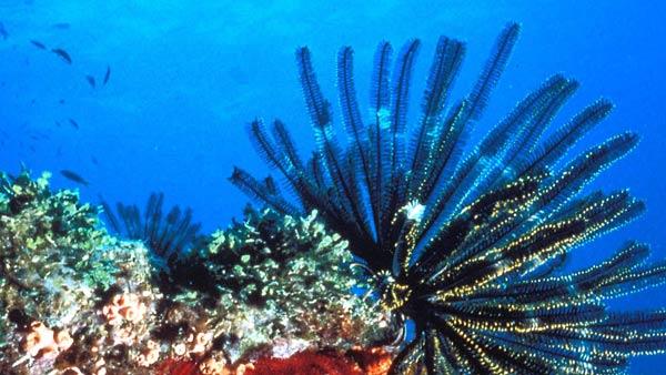Podvodni svet (osim riba) - Page 6 Korall10