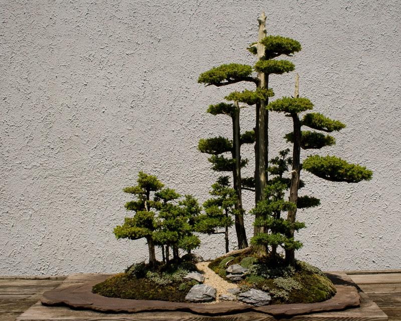 Bonsai - Page 33 Miniat10