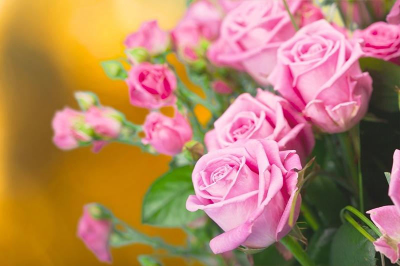 Cveće - Page 22 Roses_20