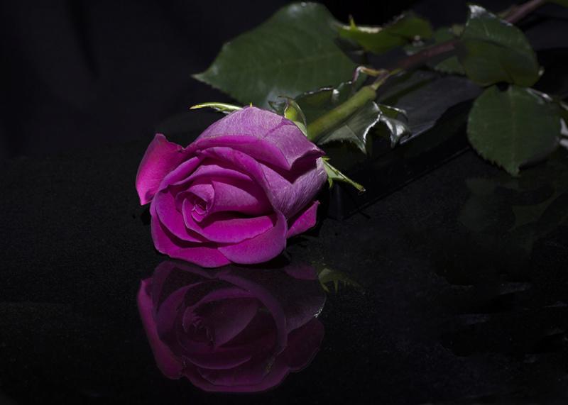 Cveće - Page 22 Roses_23