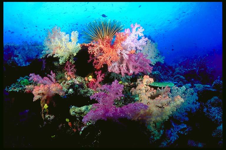 Podvodni svet (osim riba) - Page 6 Soft_c10