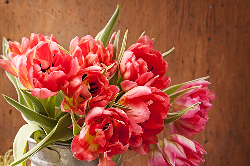 Cveće - Page 22 Tulips15