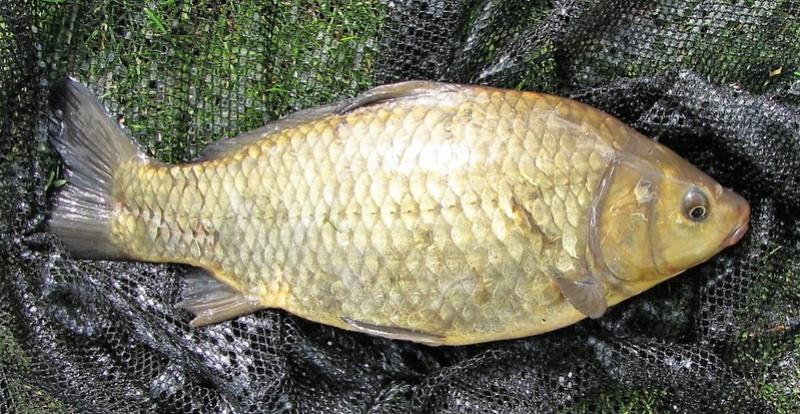 Petite pêche à l'anglaise en étang Img_0013