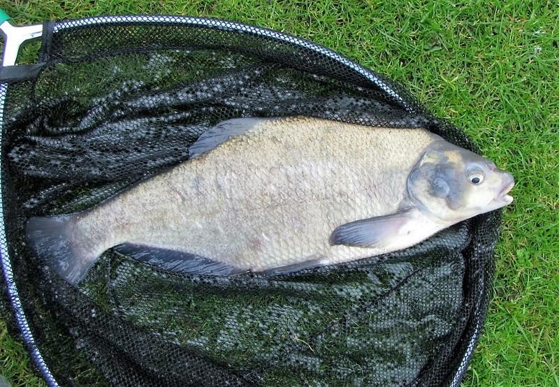 Petite pêche à l'anglaise en étang Img_0017