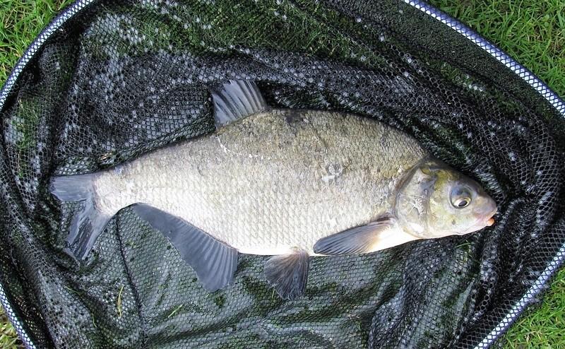 Petite pêche à l'anglaise en étang Img_0018