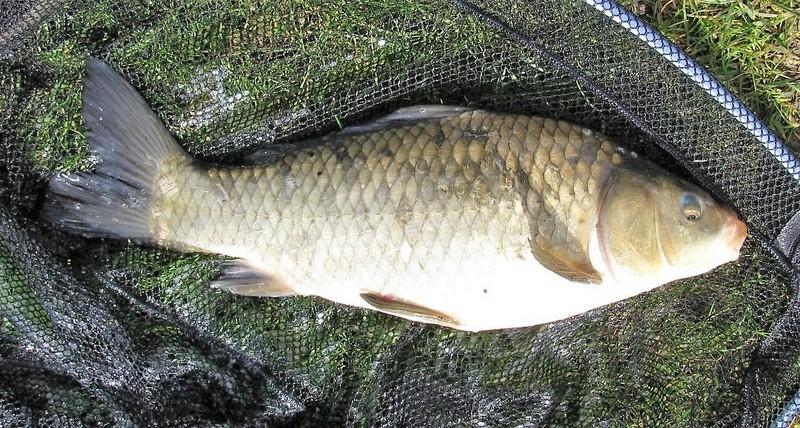 Petite pêche à l'anglaise en étang Img_0019