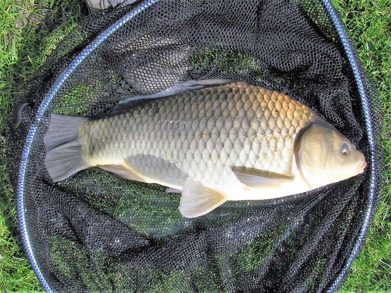 Petite pêche à l'anglaise en étang Img_0020