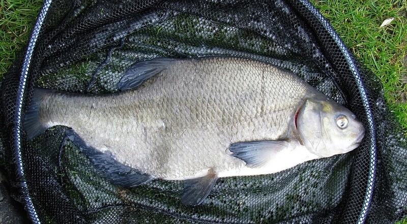 Petite pêche à l'anglaise en étang Img_0021