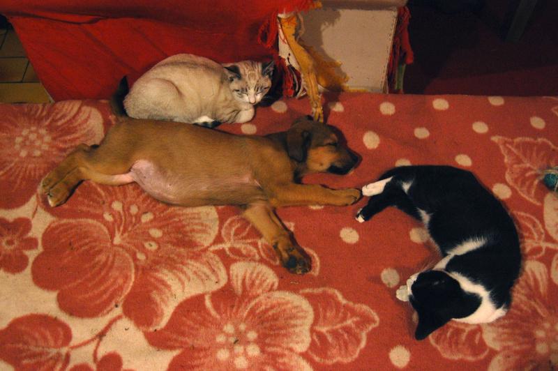 Ganoush et Adolf, deux chatons - ADOPTÉS Dsc_0025