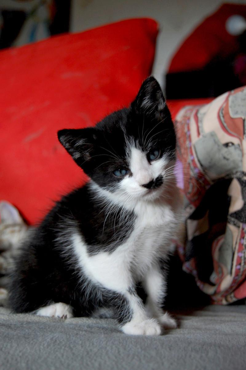 Ganoush et Adolf, deux chatons - ADOPTÉS Dsc_0210