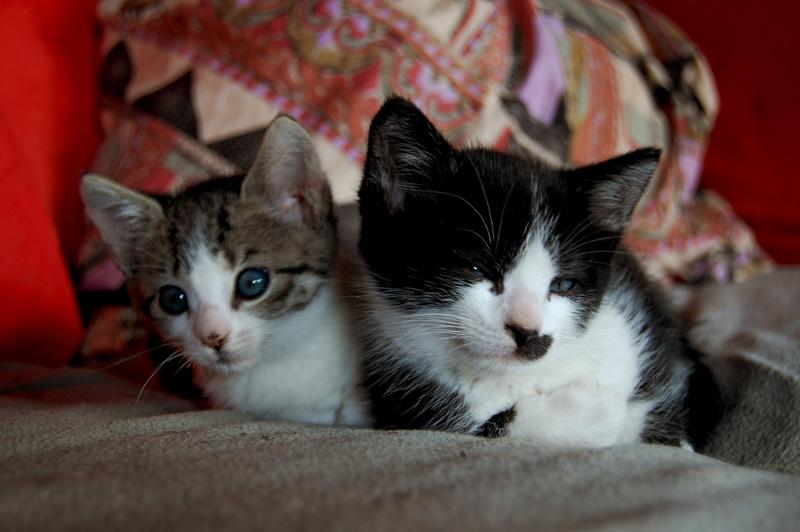 Ganoush et Adolf, deux chatons - ADOPTÉS Dsc_0211