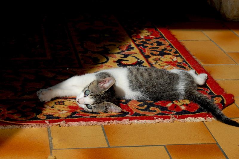 Ganoush et Adolf, deux chatons - ADOPTÉS Dsc_0413